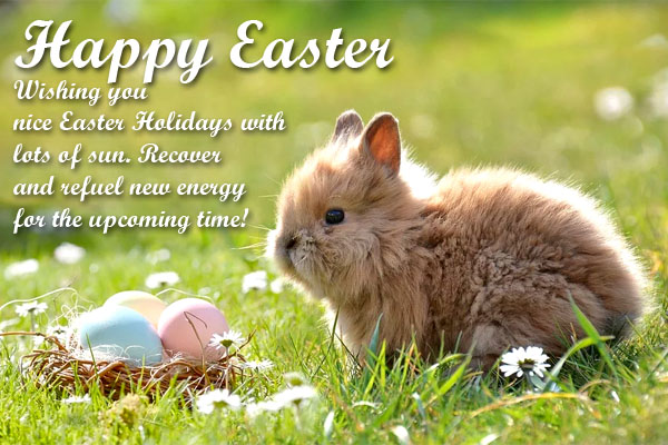 Nice and Sweet little bunny brings easter wishes